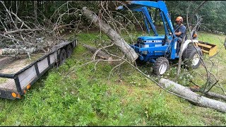 Pulling down dead trees