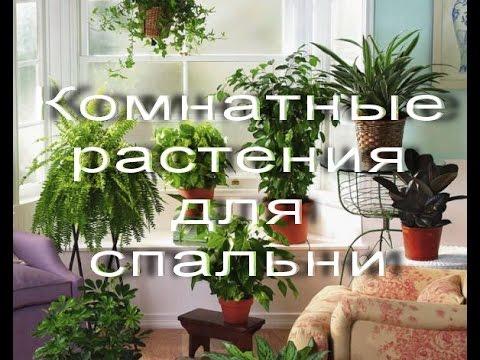 Какие комнатные растения подойдут для СПАЛЬНИ