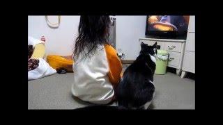 猫と5歳児 一緒にTV鑑賞 時々赤ちゃんと犬