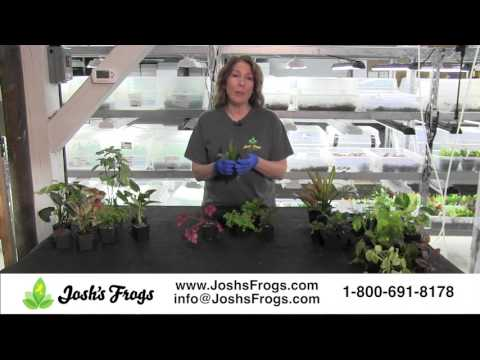 Josh's Frogs Dart Frog Vivarium Plant Kits