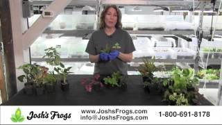 Joshs Frogs Dart Frog Vivarium Plant Kits