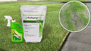 How to treat & prevent lawn grub infestation in your lawn