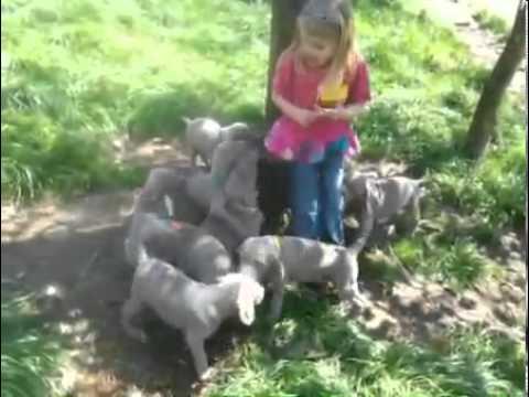 Come visit our Farm raised pups!!!