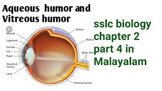 Aqueous  Humor  And Vitreous  Humor Sslc Biology Chapter 2 Part 4 In Malayalam