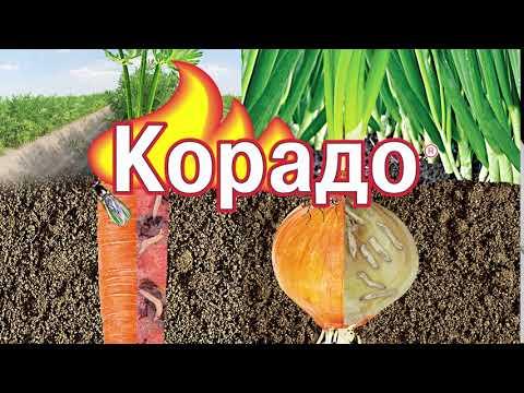 Корадо от луковой и морковной мухи (10 секунд)