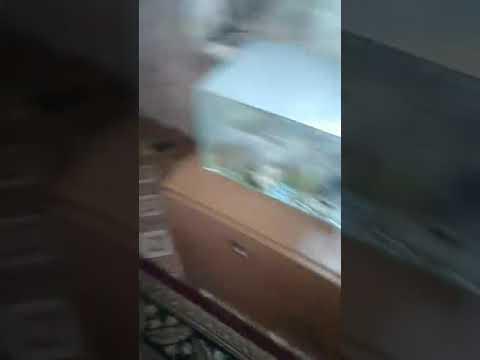 Крик о помощи: В Якутске затопило дом пенсионерки с больным ребенком