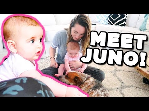 SURPRISING BABY WITH A NEW PUPPY! WE ADOPTED!!