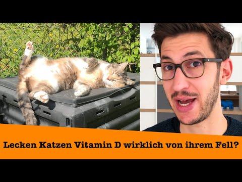 Katzen lecken Vitamin D von ihrem Fell. Lüge oder Wahrheit?