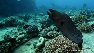 Diving in the Red Sea - Northern Route - Video 3 - HUGE Eels