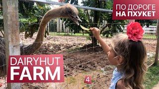 Ферма Животных Dairy Hut Farm – по дороге на Пхукет