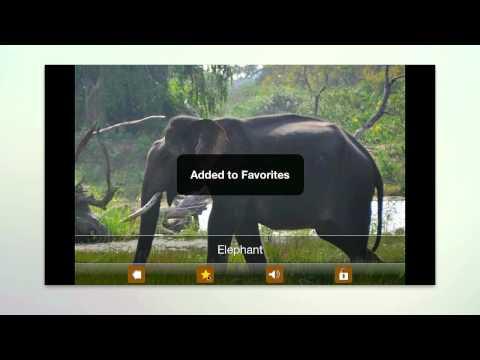 Vídeo do Kids Zoo,Animal Sounds & Photo