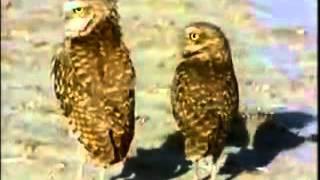 VIDEO BINATANG KAWIN (DIJAMIN LUCU)