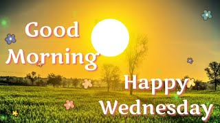 Good Morning 💕💐 Happy Wednesday 🐤💕 Wishes, Whatsapp Video Message, Greetings