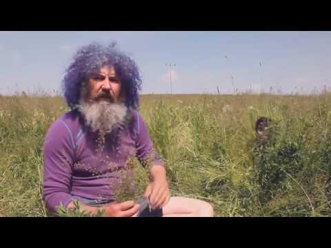 Robert Franz - Kräuter ABC - Die heilende Kraft der Natur