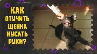 Как отучить щенка кусать руки (один из способов)