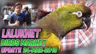 Lalukhet Sunday Birds Market 24-3-2019 Latest Updates(Jamshed Asmi Informative Channel)In Urdu/Hindi