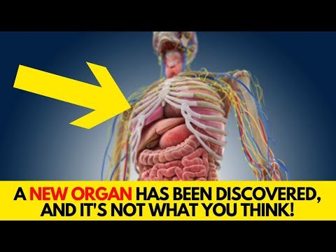 A New Organ Has Been Discovered, And It's NOT What You Think!