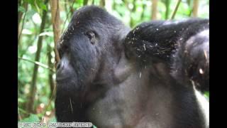 preview picture of video 'Rwanda and Gorilla Safari 2008 - Slide Show'