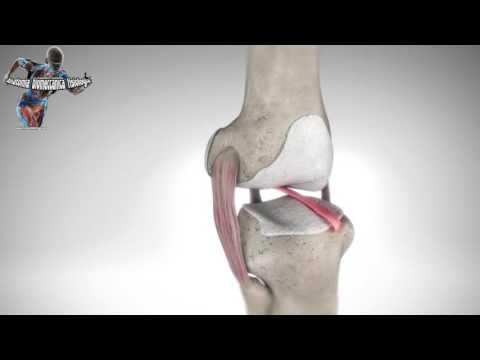 Dolore al ginocchio e inguine