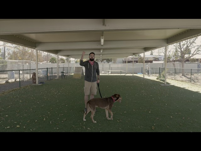 Video #9:  Left Hand Turn Large Dog