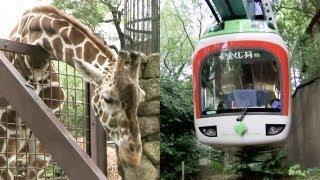 キリンやカバも登場!上野動物園モノレールPart2レイルリポート#06GiraffeandHippopotamusappear!UenoZooMonorail