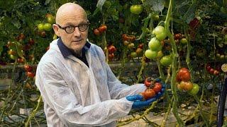 Verminder de kans op neusrot in tomaten
