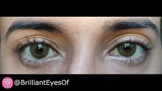Sweety Batis Brown - (Brilliant Eyes)