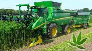Hemp Harvest | HempFlax | John Deere T660i Double Cut Combine | For CBD oil