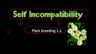 Self incompatibility in plants and significance in plant breeding