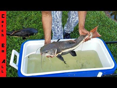 FISH TRADE Pond to MONSTER AQUARIUM transfer!
