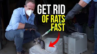 The BEST way to GET RID of Rats and Mice Quickly! New trapping system holds 37 rats!!