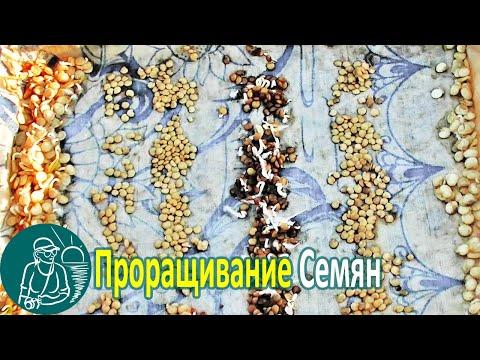 Man kann, wenn abmagern morkowku zu essen