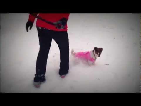 Frosty Barry XD (Music : Frosty the Snowman - Dan Tyminski)