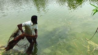 Net Fishing | Catching Lot Of Fish With Cast Net | Net Fishing in the village (Part-305)