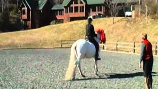 Orfeo, lusitano stallion: fearless & steady