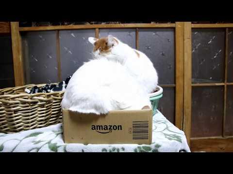 Amazonの箱と猫 Box and cat 2018#17