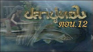 ปลาบู่ทอง ตอน 12 - dooclip.me