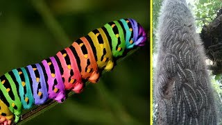 8 cảnh tượng hãi hùng về loài sâu xâm chiếm trái đất