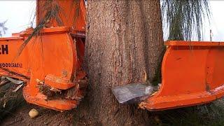 Dangerous Biggest Tree Cutting Long Reach Excavator Skill , Tree Harvesting Machine Heavy Equipment