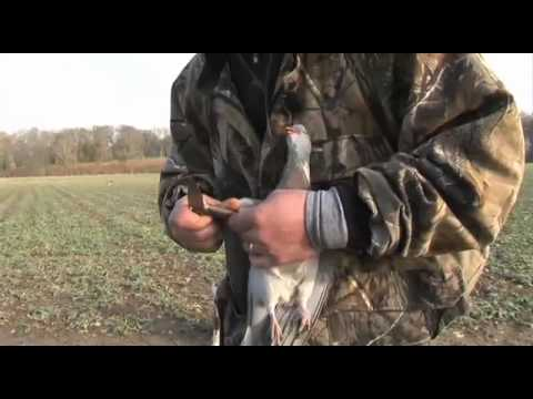 Sporting Shooter pigeon DVD preview