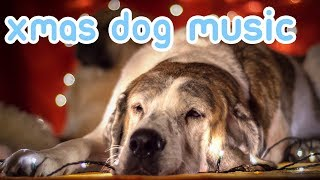Xmas Music for Dogs! Joy to the World, Merry Christmas Everybody!