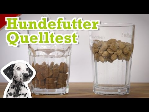 Hundefutter Quelltest mit Platinum Trockenfutter