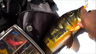 preview picture of video 'FishingSifu.com - Video 42 - Peacock Bass Casting with Ultralight Casting Set with 1lb Line'