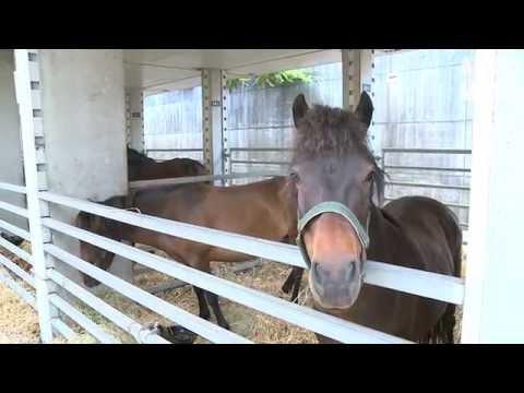 Reportagem do 'AltoMinho TV', sobre a VIII Feira do Cavalo de Ponte de Lima