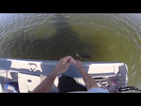 Bass Fishing on the Pond Prowler with the GoPro