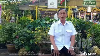 New Year Wish from Head of Wat Pra Baht Namphu