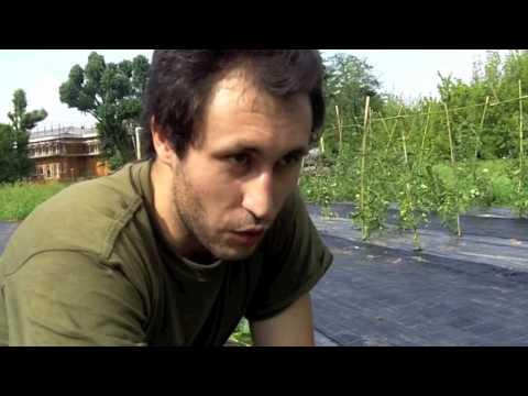 Analisi del sangue su parassiti Nizhny Tagil