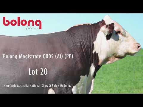 BOLONG MAGISTRATE Q005 (AI) (PP)