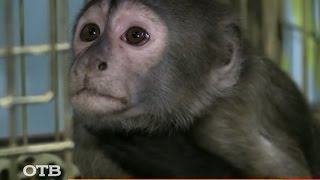 """Как собрать """"Деньги для обезьянки"""""""