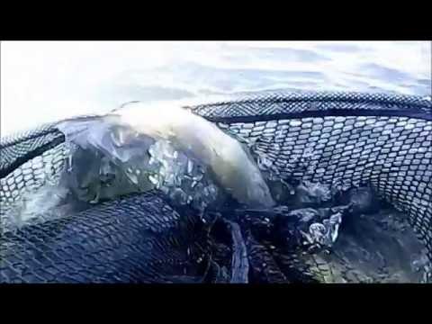 Pescando su tokhatsa 5